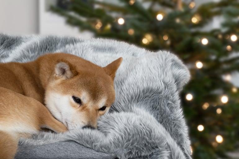 rocco-bank-kerst-tanja-van-hoogdalem
