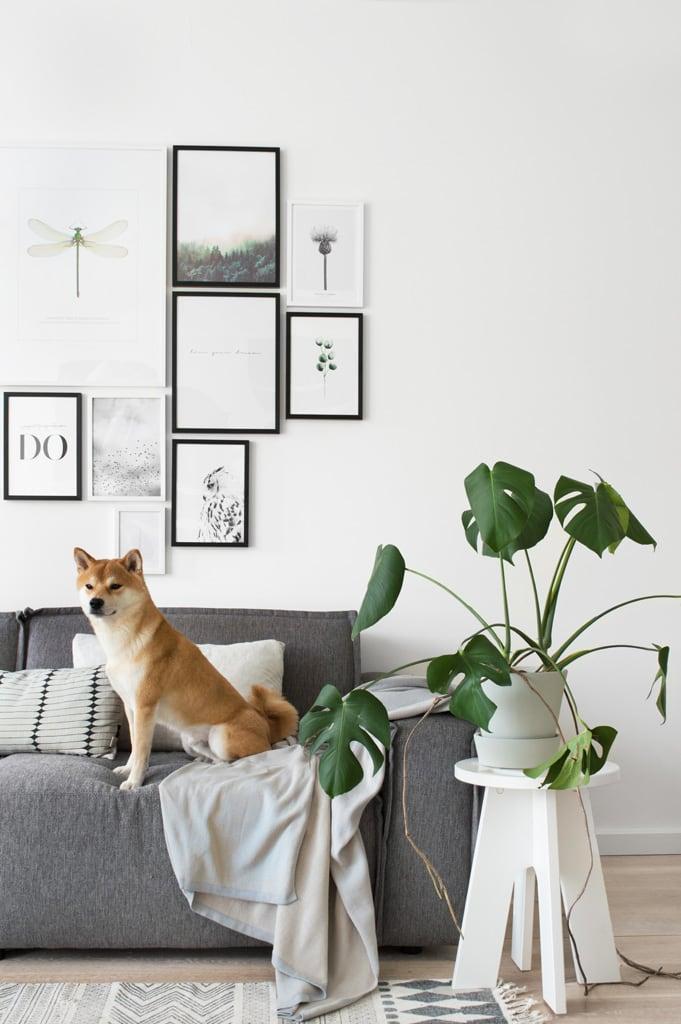 Favorieten  Rocco blanket dog - door Tanja van Hoogdalem