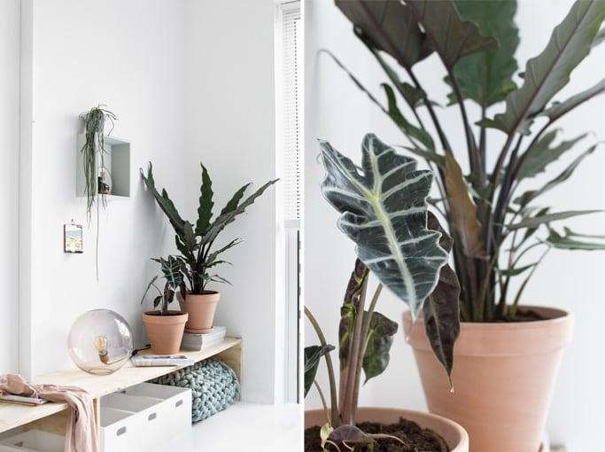DIY wandbank slaapkamer - Tanja van Hoogdalem