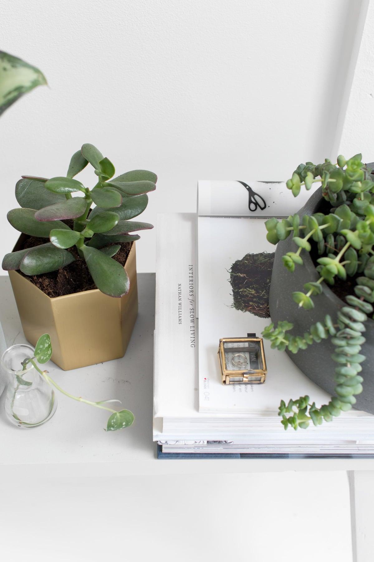 Ferm Living planten - Tanja van Hoogdalem
