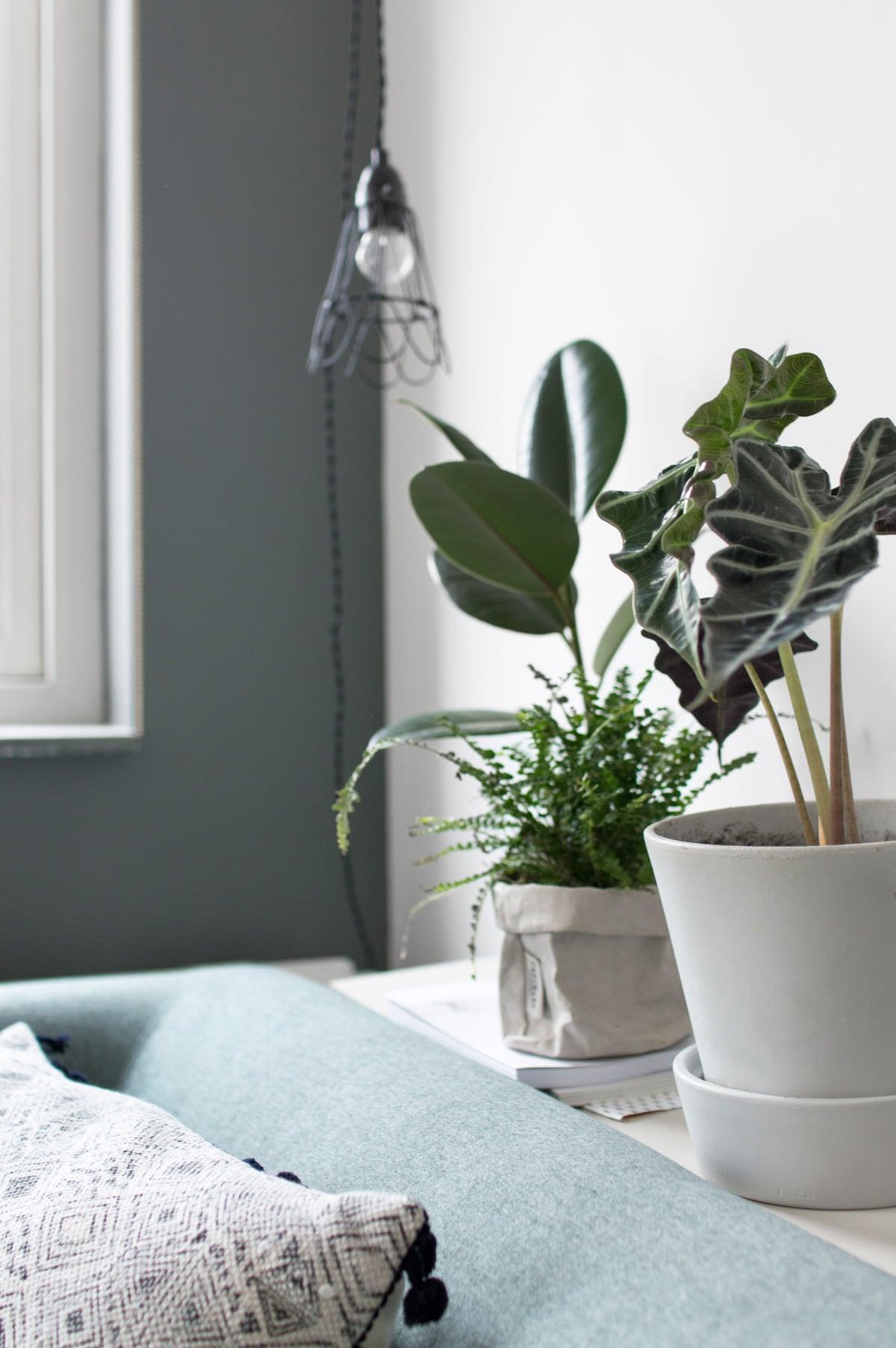 Planten in huis - Tanja van Hoogdalem