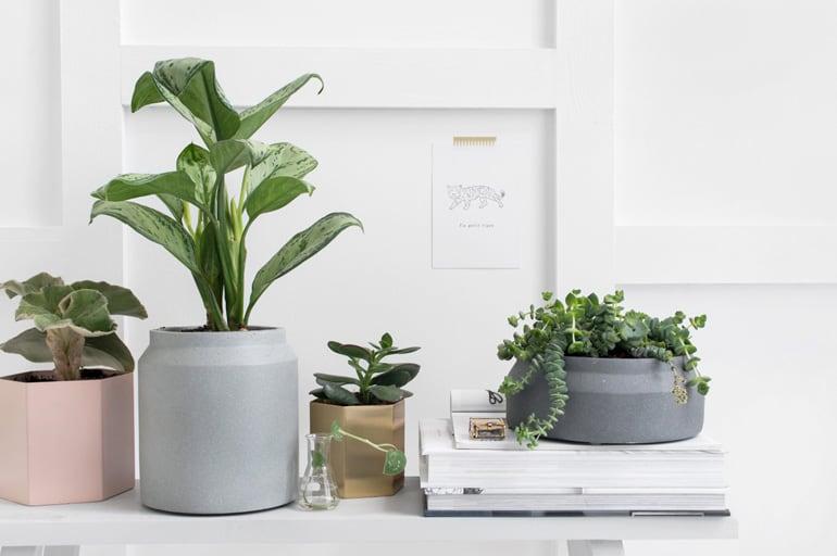 De mooiste bloempotten voor je planten
