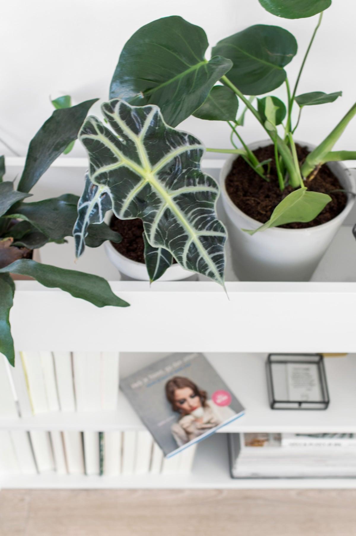 BILLY boekenkast en plantenbak in één - Tanja van Hoogdalem