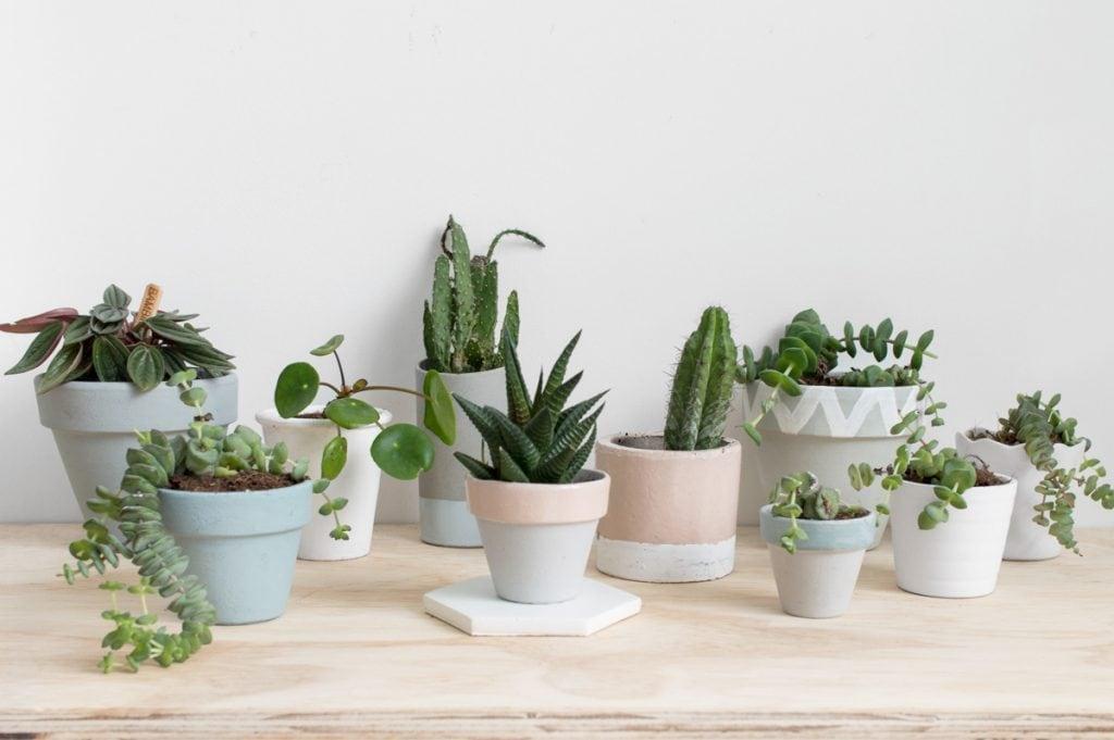 Miniplantjes terracotta potjes - Tanja van Hoogdalem