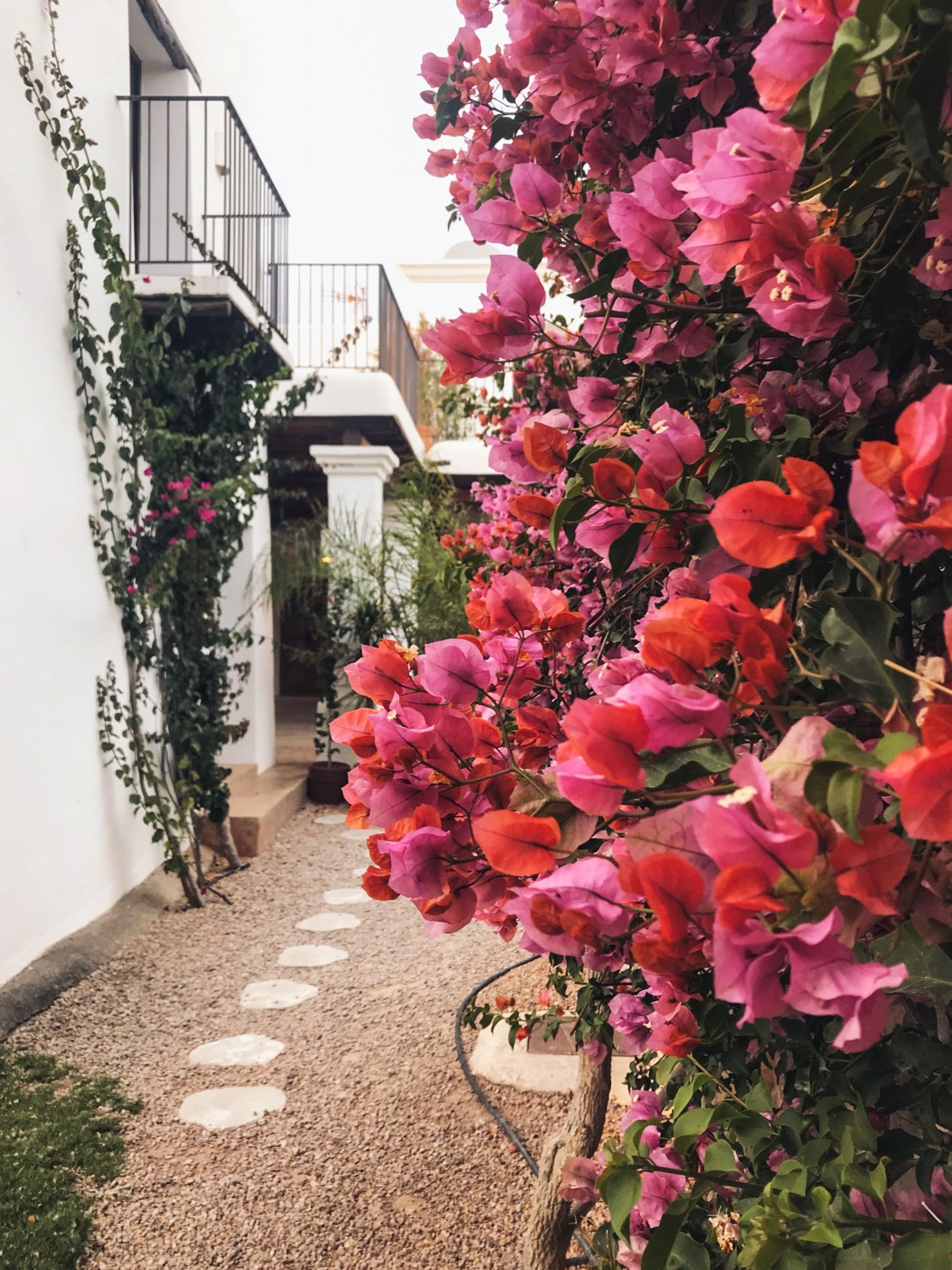 Ibiza-bloemen-Siempre-Agosto-Tanja-van-Hoogdalem