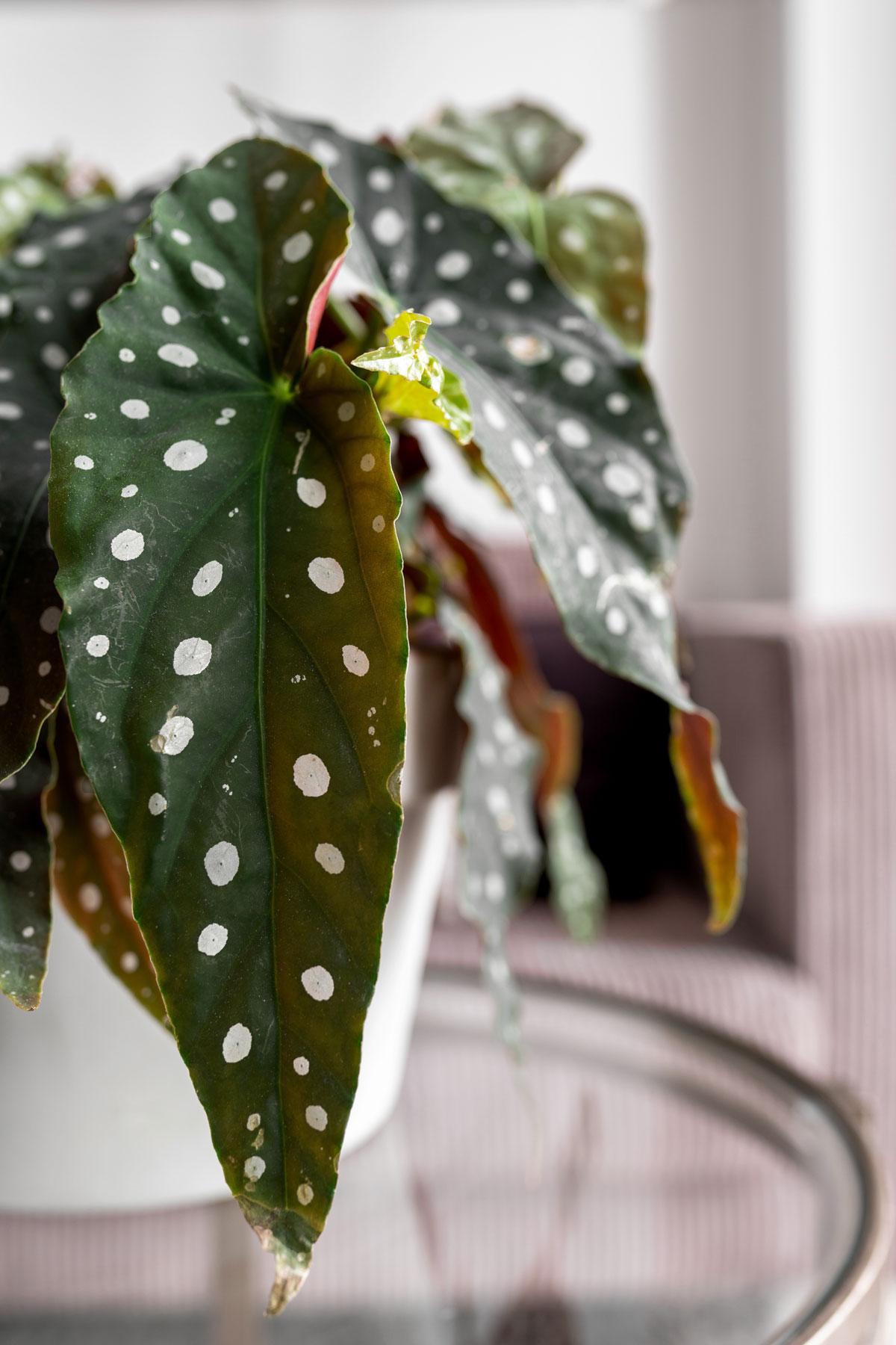 Stippenplant - Tanja van Hoogdalem